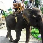 Bali_web
